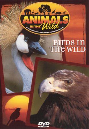 Animals in the Wild: Birds in the Wild