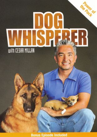 Dog Whisperer : Power of the Pack