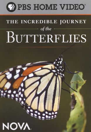 NOVA : The Incredible Journey of the Butterflies