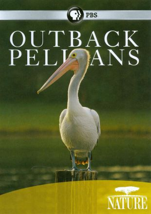 Nature : Outback Pelicans