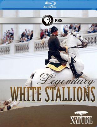 Nature : Legendary White Stallions