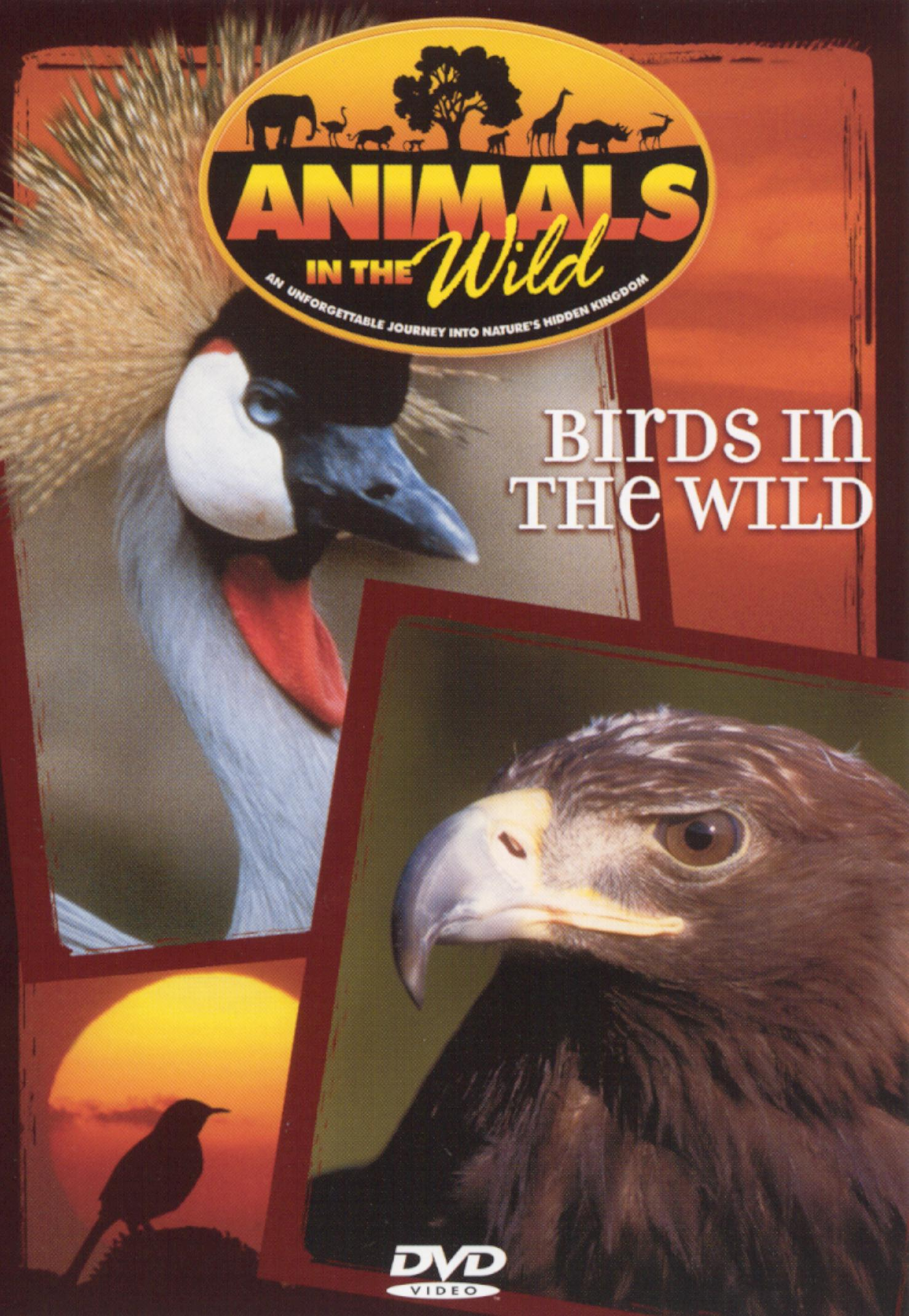 Animals in the Wild: Birds in the Wild