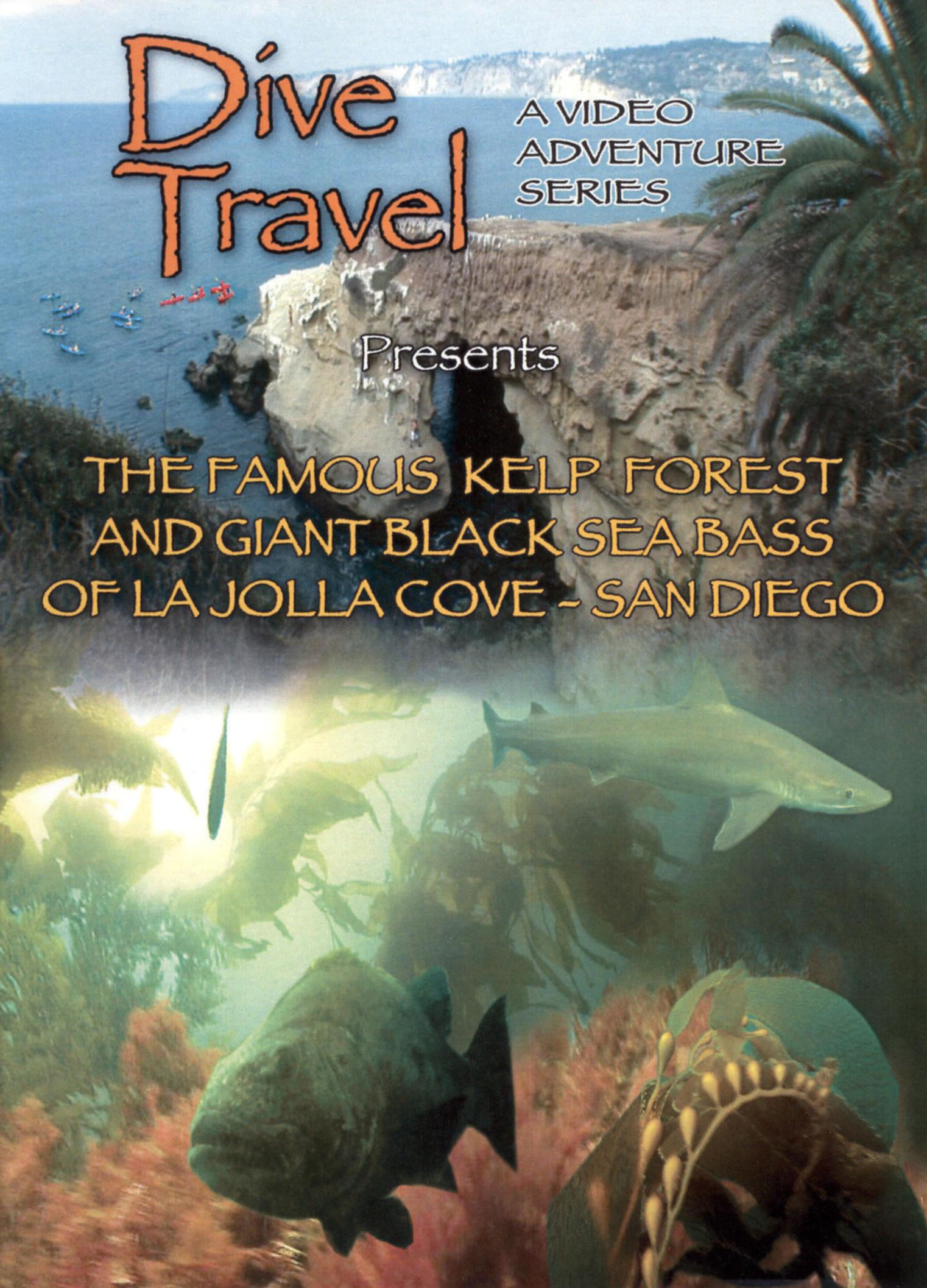 Dive Travel: Famous Kelp Forest and Giant Black Sea Bass ...
