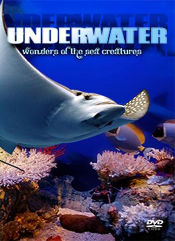 Underwater: Wonders of the Sea Creatures