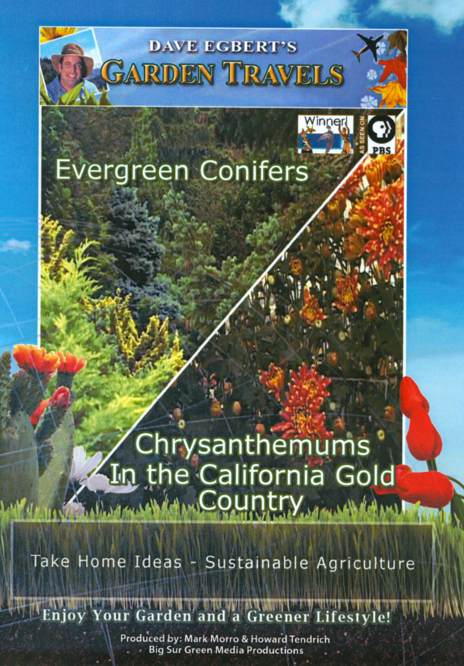 Dave Egbert's Garden Travels: Evergreen Conifers/Chrysanthemums in the California Gold Country