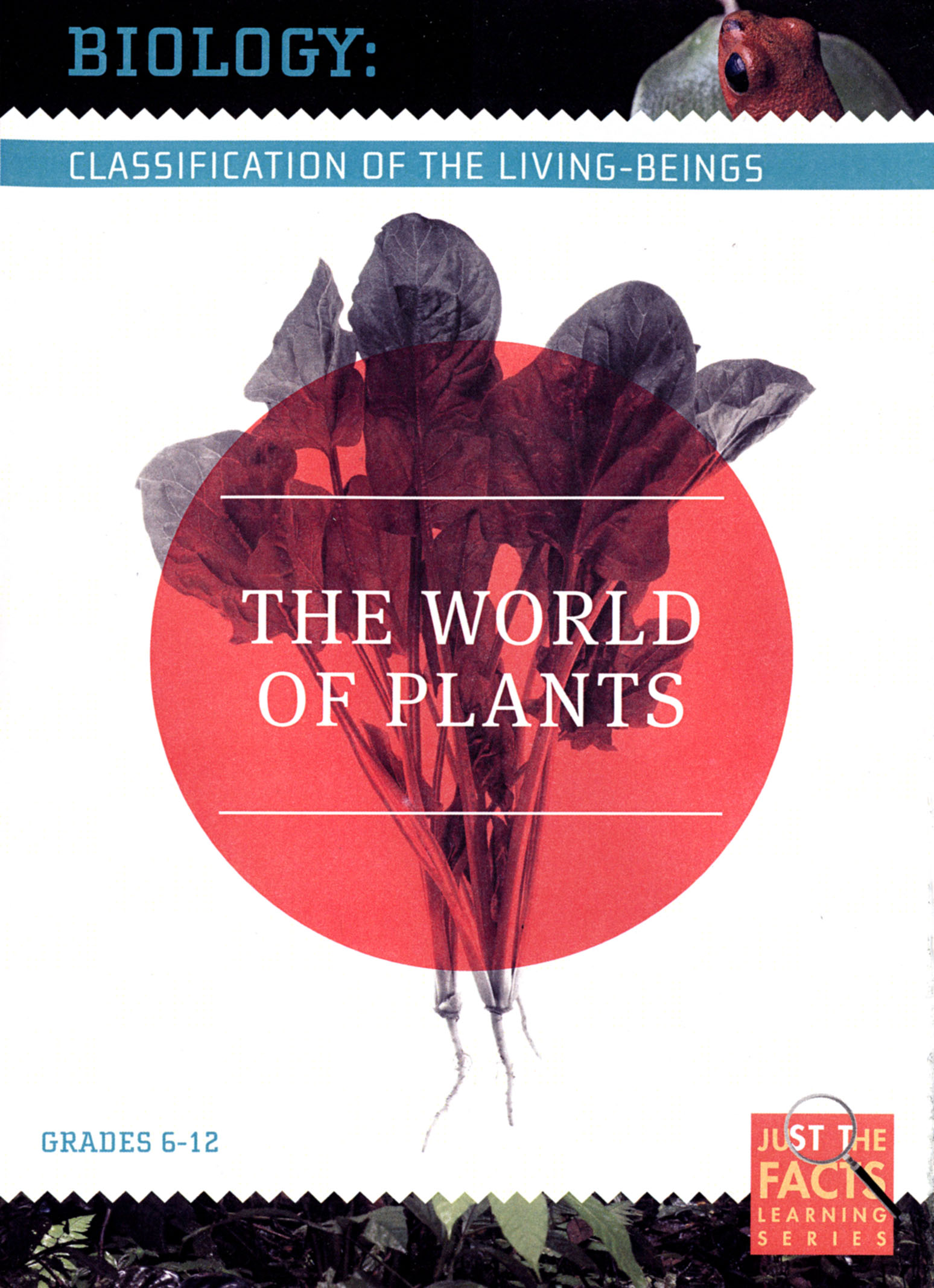 Biology Classification: The World of Plants