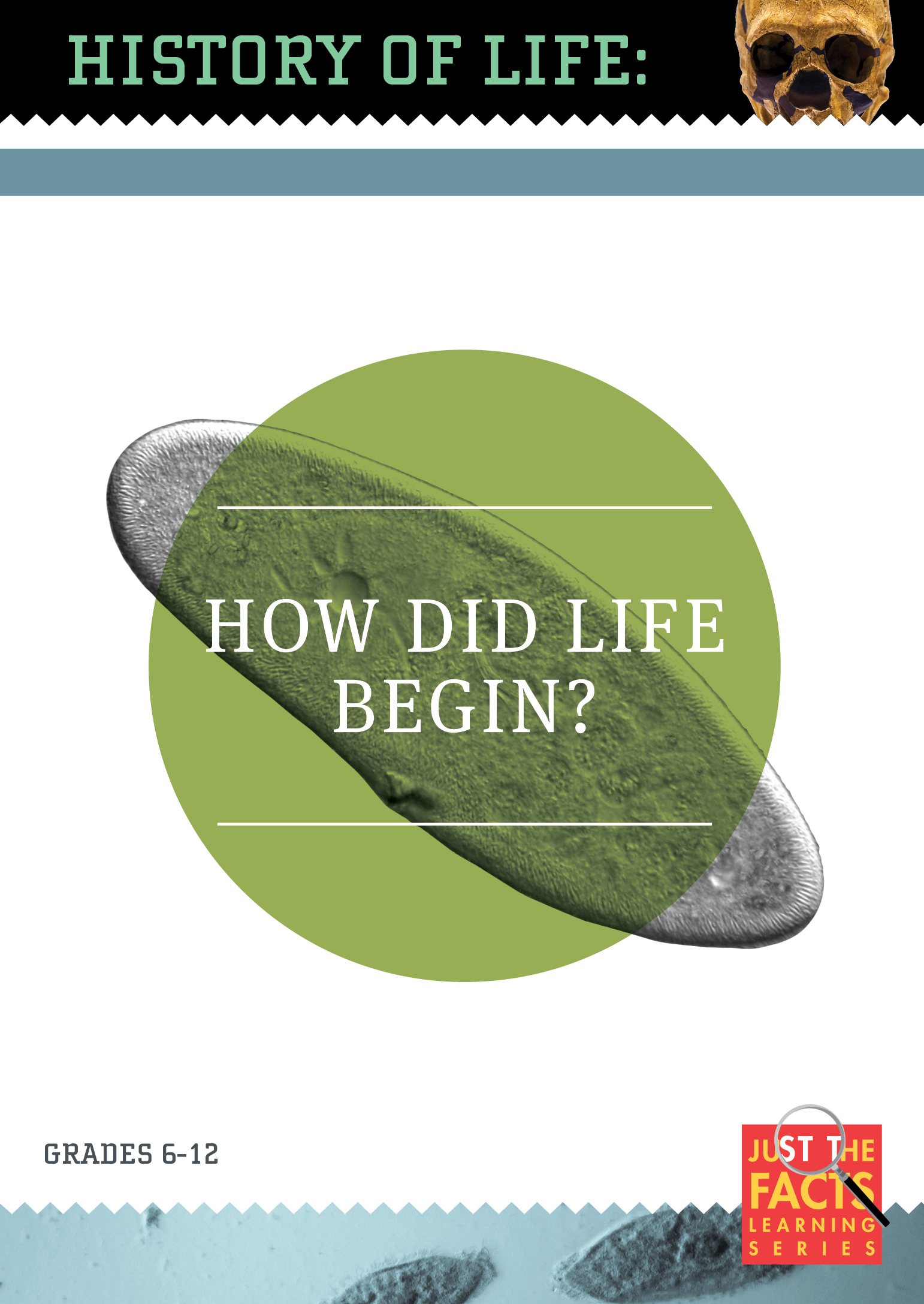 History of Life: How Did Life Begin?