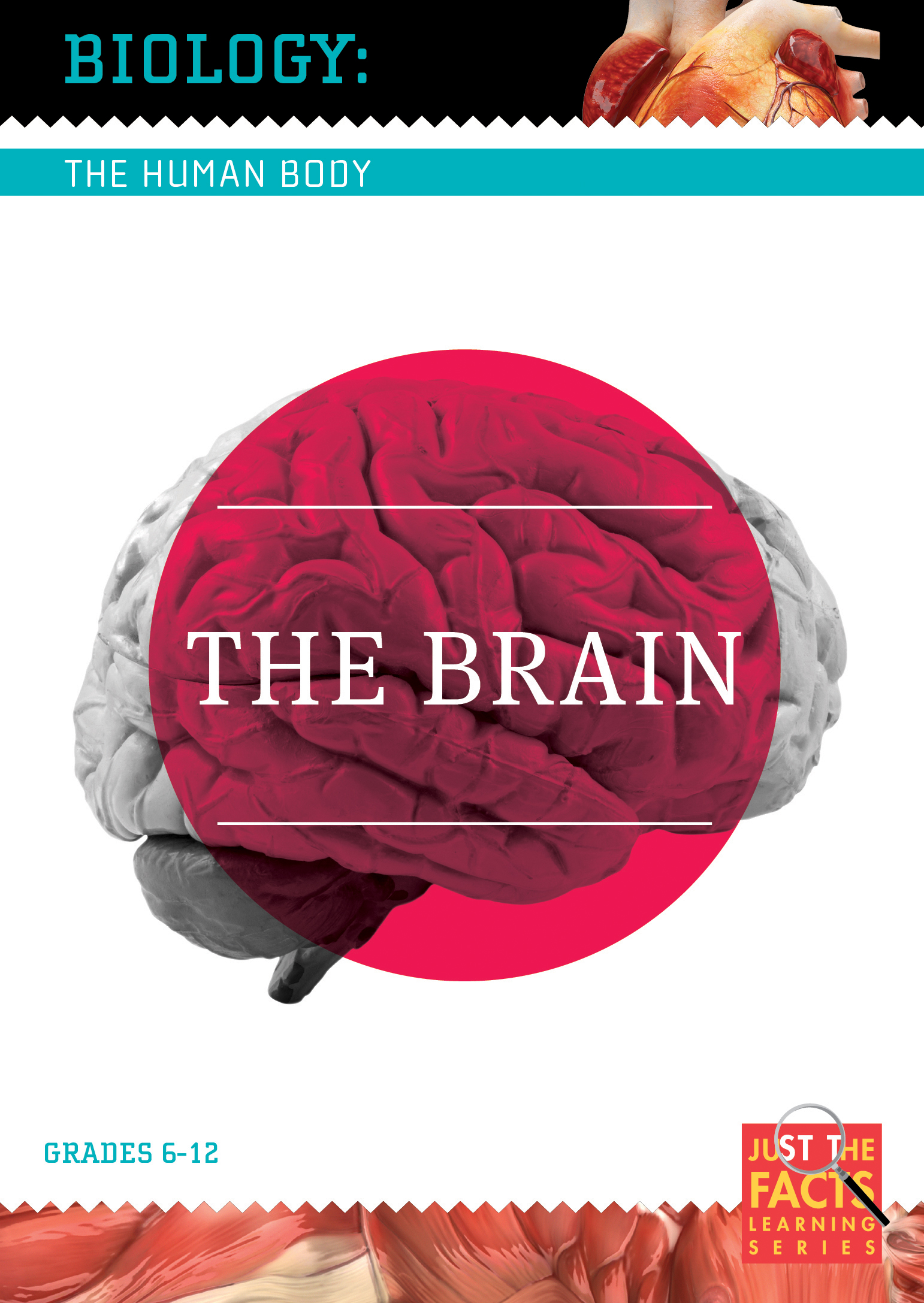 Biology of the Human Body: The Brain