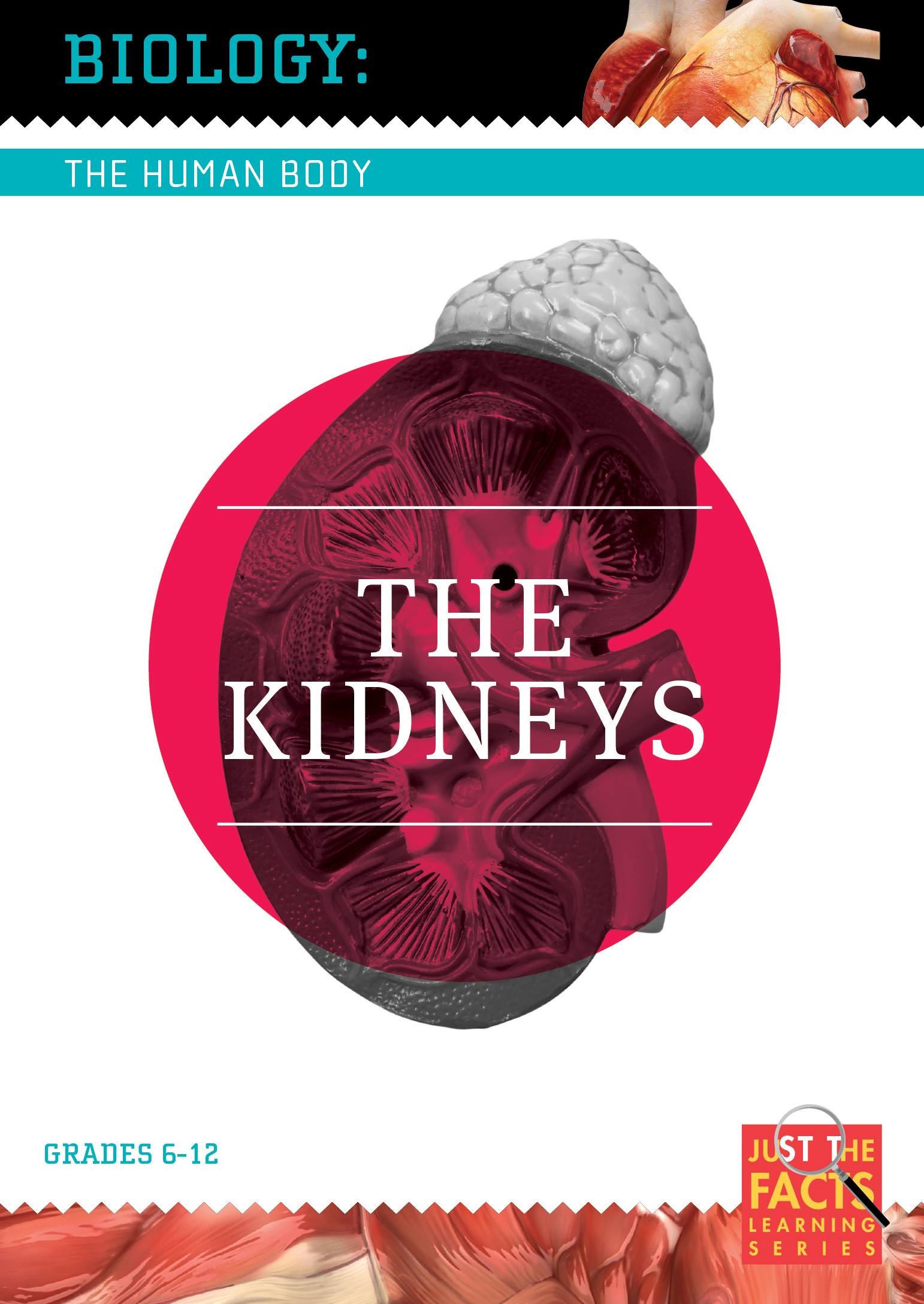 Biology of the Human Body: The Kidneys