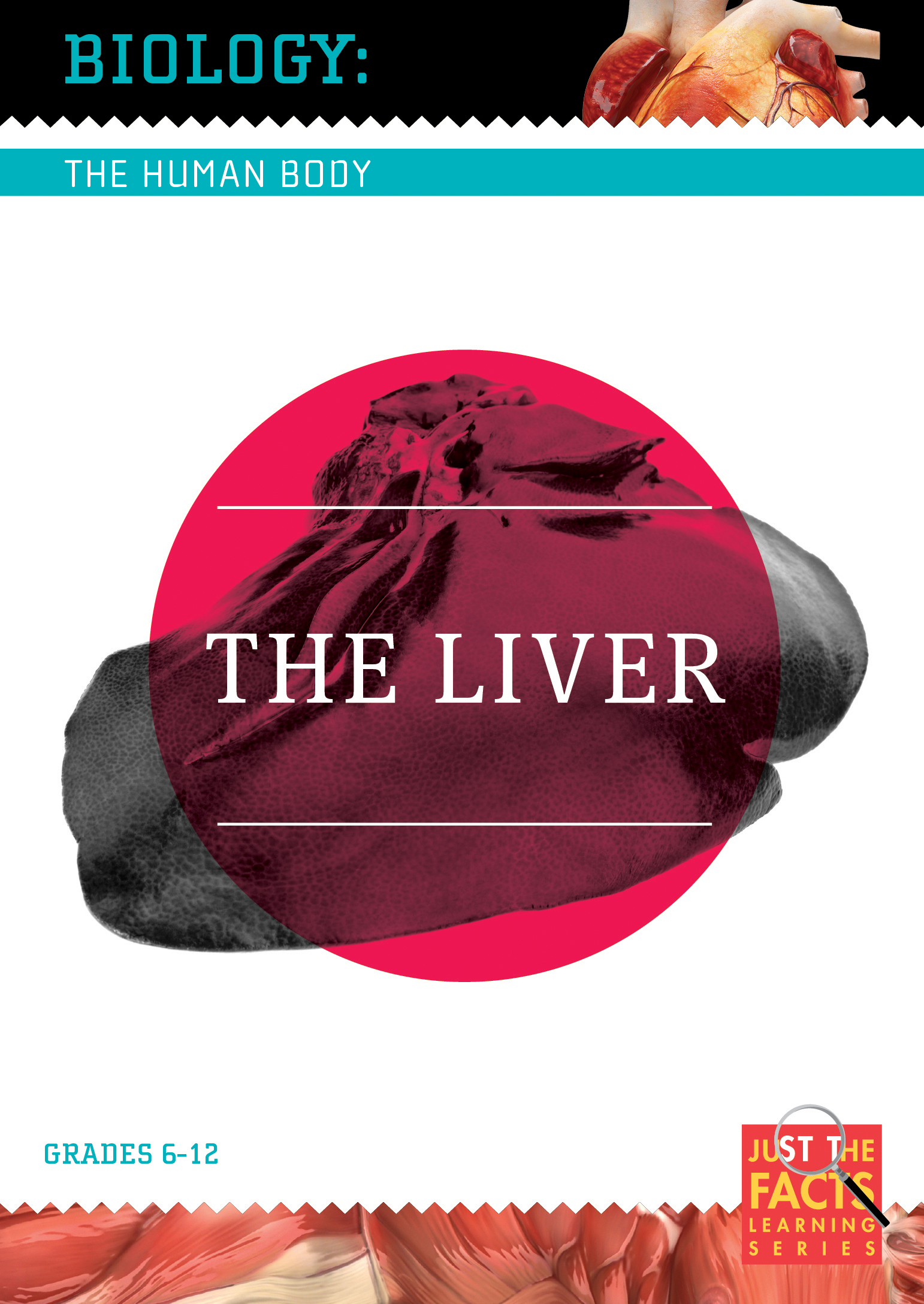 Biology of the Human Body: The Liver