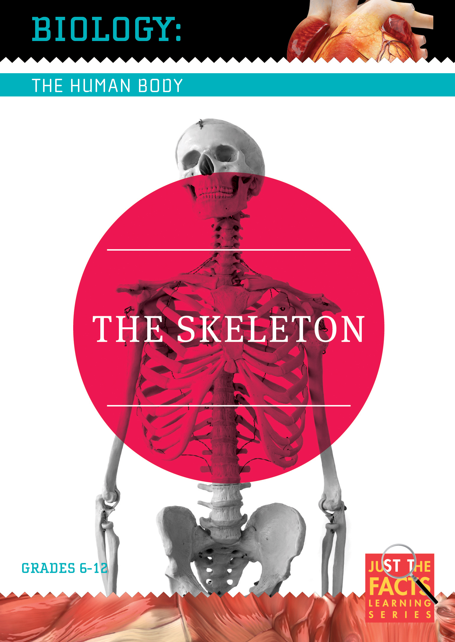 Biology of the Human Body: The Skeleton