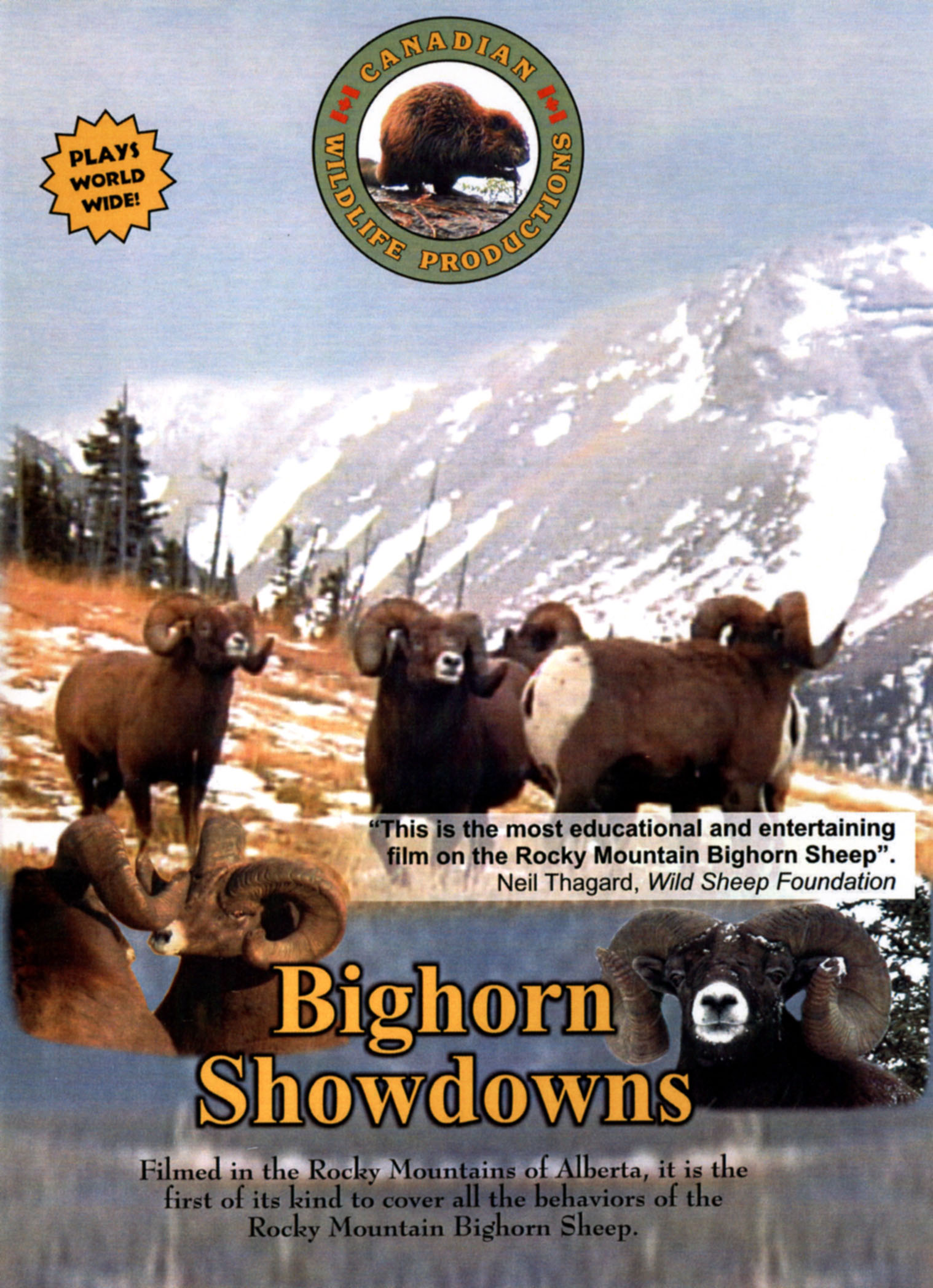 Bighorn Showdowns: Volume Three