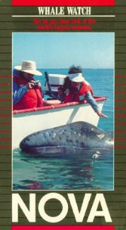 NOVA : Whale Watch
