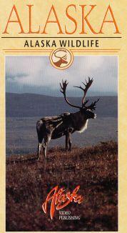 Alaska: Alaska Wildlife