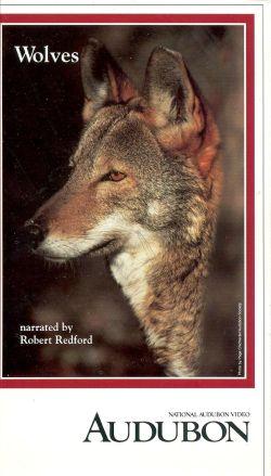 Audubon Video: Wolves