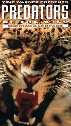 Predators of the Wild: Cheetah and Leopard