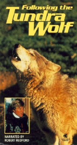 Following the Tundra Wolf