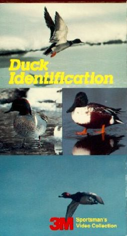 Duck Identification
