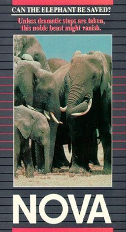 NOVA : Can the Elephant Be Saved?