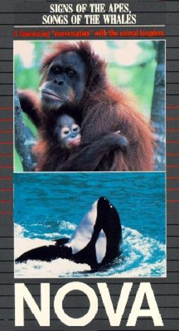 NOVA : Signs of Apes, Songs of Whales