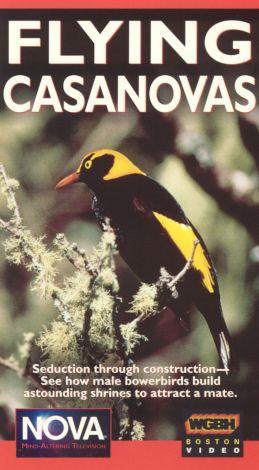 NOVA : Flying Casanovas