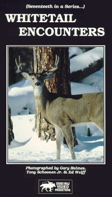 Whitetail Encounters