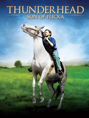 Thunderhead---Son of Flicka