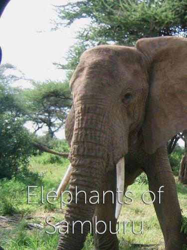 Elephants of Samburu