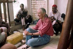 Jane Goodall's State of the Great Ape