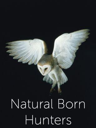Nature: Natural Born Hustlers