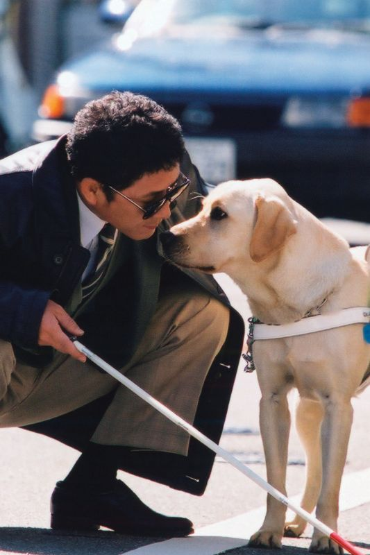 Quill The Life Of A Guide Dog Free Download