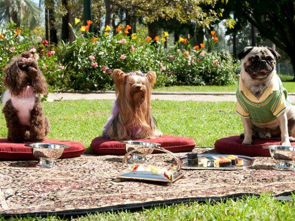 Beverly Hills Chihuahua 2 (2011) - Alex Zamm | Cast and ...