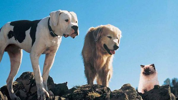 Homeward Bound: The Incredible Journey (1993) - Full Cast ...