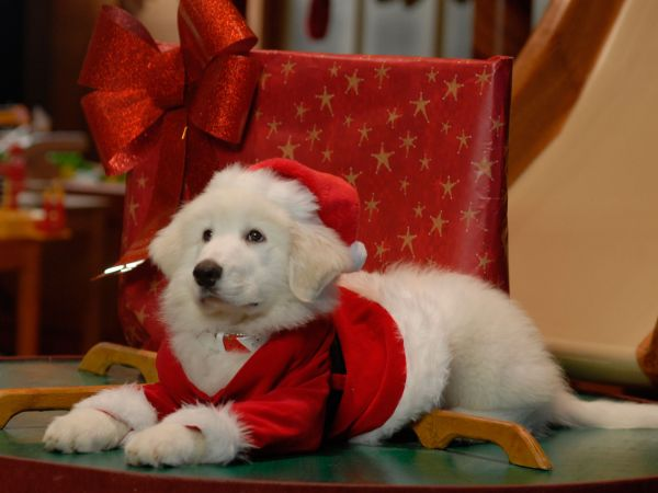 What Breed Of Dog Is Puppy Paws In Santa Buddies