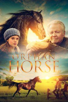 Orphan Horse