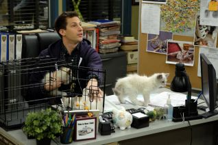 Brooklyn Nine-Nine: Terry Kitties
