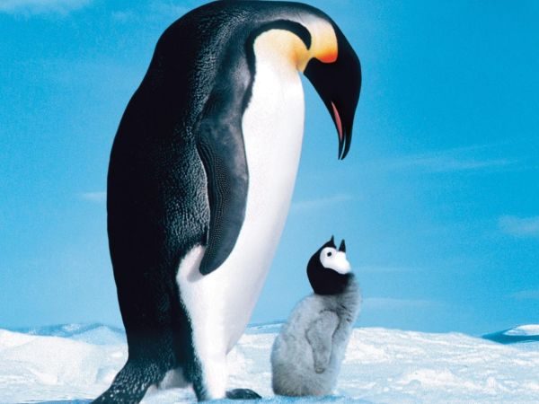 The theme of love in the march of the penguins a film by luc jacquet