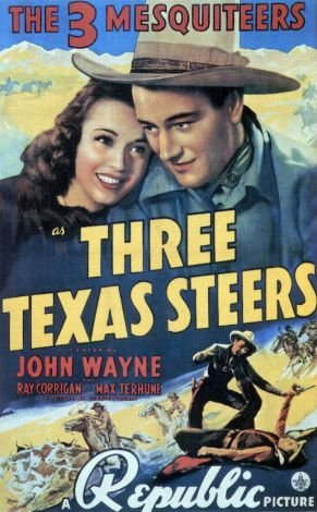 Three Texas Steers