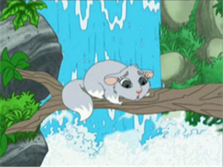 Go, Diego, Go! : Chinta the Baby Chinchilla