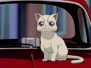 Noir: 6: Lost Kitten