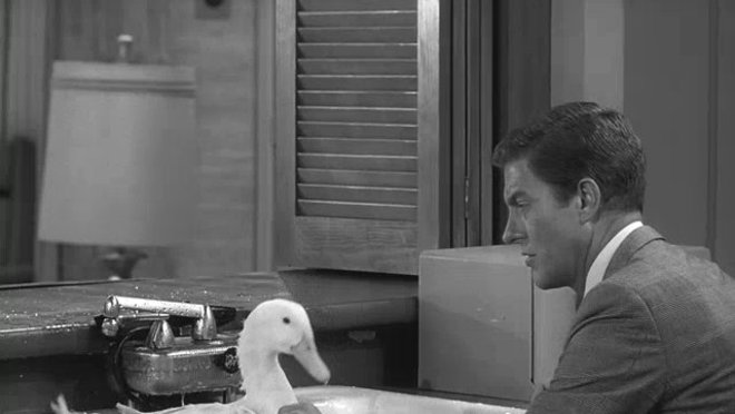 The Dick Van Dyke Show: Never Name a Duck