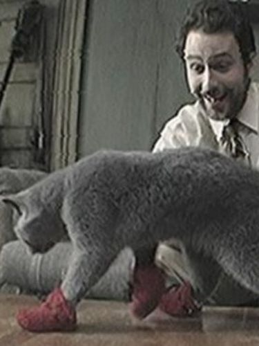 It S Always Sunny In Philadelphia Paddy S Pub Home Of The Original Kitten Mittens 2009 Randall Einhorn Synopsis Characteristics Moods Themes And Related Allmovie Purr, purr, purr, oh, let us have some pie. allmovie