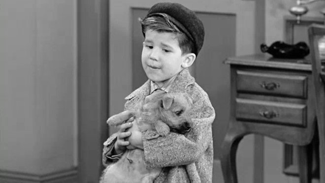 I Love Lucy: Little Ricky Gets a Dog