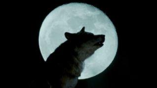 Wolfblood: Occam's Razor