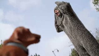 Wilfred: Sincerity