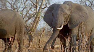 The Life of Mammals: Plant Predators