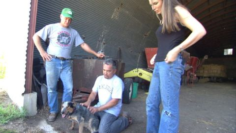 Dog Whisperer : Molly, Jane and Genoa