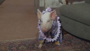 Green Acres: Guess Who's Not Going to the Luau?