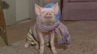 Green Acres: The Special Delivery Letter