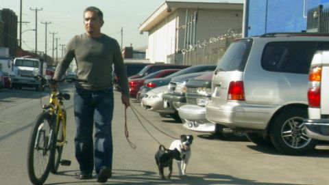 Dog Whisperer : Chuy, Jack & Carmine